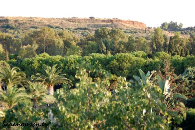 Widok z balkonu - wokół głównie drzewa iglaste i palmy.