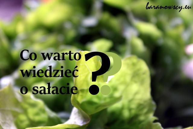 salata_0