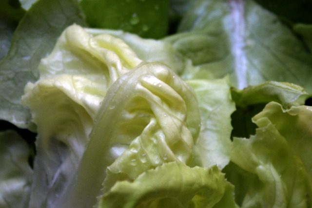 salata_1