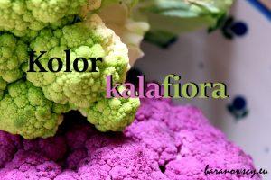kolor_kalafiora