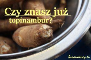 czy_znasz_juz_topinambur