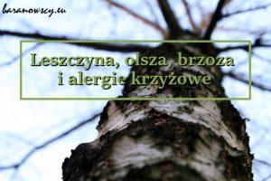 brzoza_3