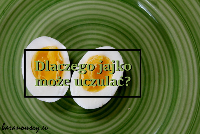 jajka_0