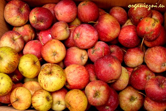 jablka_1