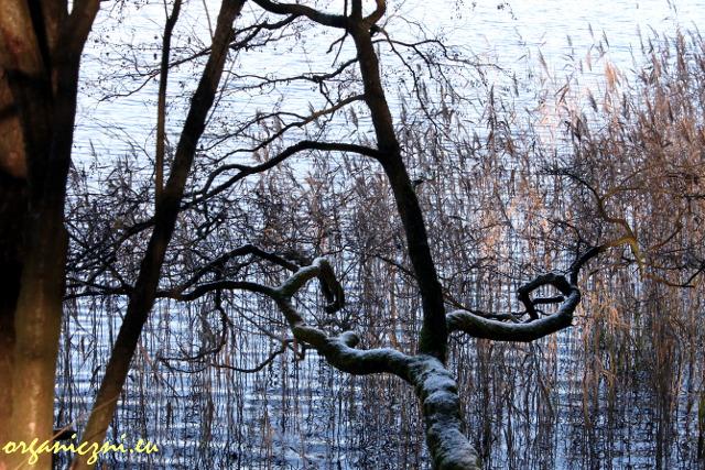 Jezioro Gościąż - wyjątkowe na skalę Europy