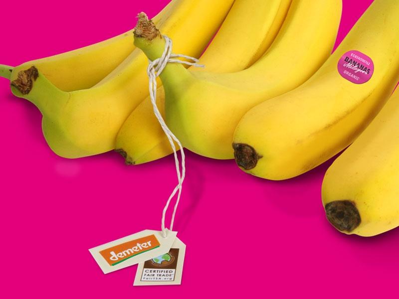 Banany Milargos. Zdjęcie: www.biotropic.com