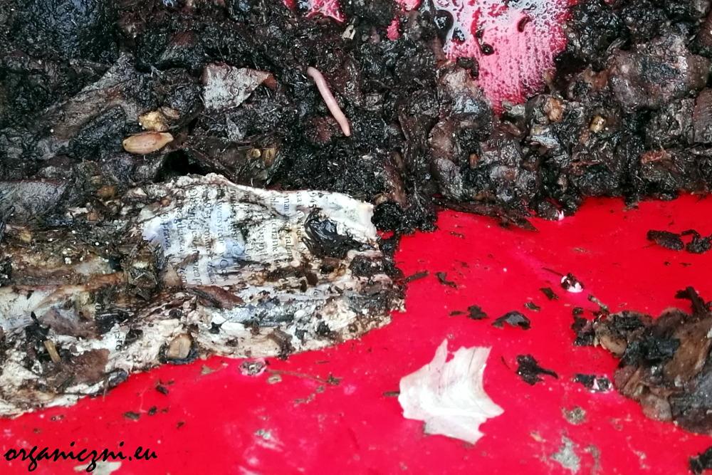 Dno naszego kompostownika: dżdżownica i kartka z kalendarza