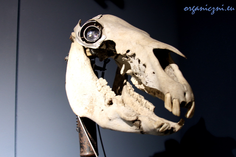 Koń by się uśmiał. MAD Museum
