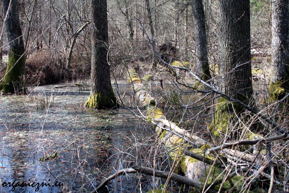Zielony Kwiecień, spacer po Puszczy
