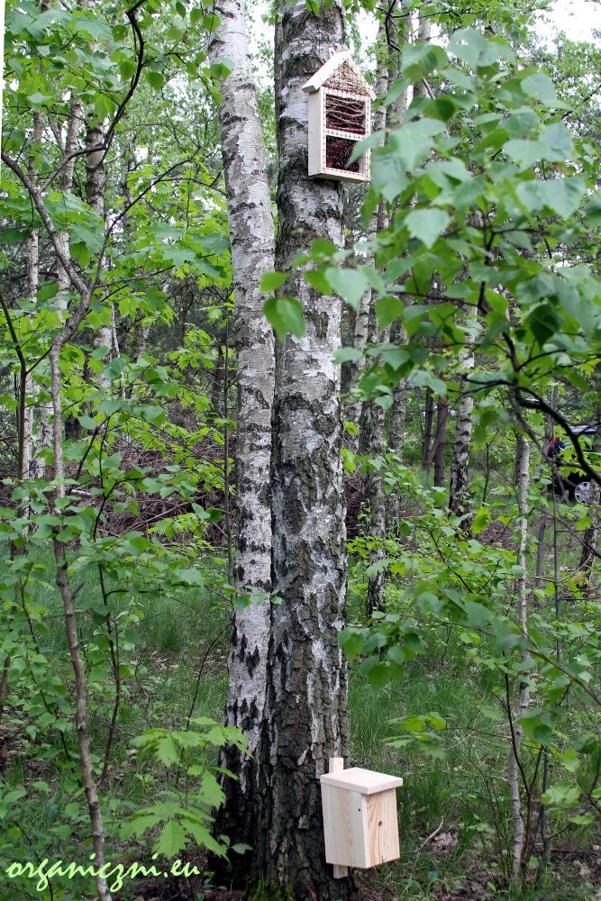 Domek dla trzmieli i domek dla innych owadów