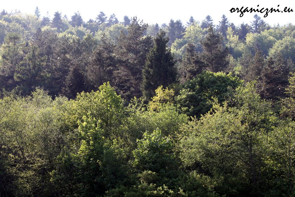 Kolory wiosny w Beskidach