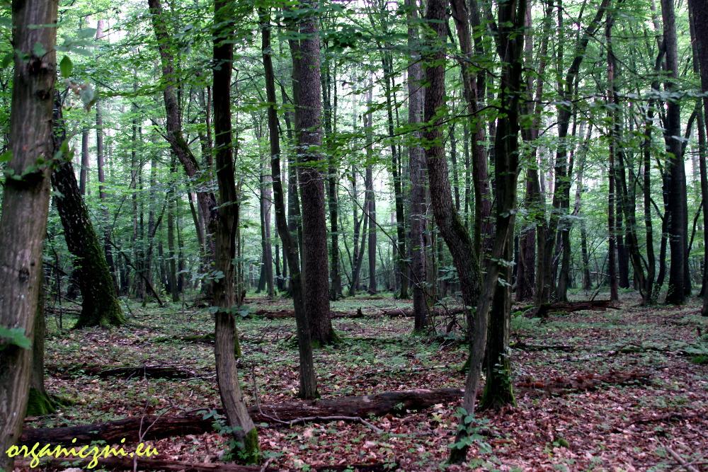 """Instrukcja obsługi lasu"""