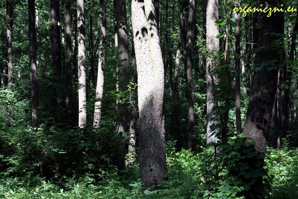 Za dnia las też jest piękny