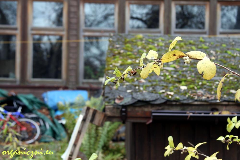 Jesienny Obóz dla Puszczy