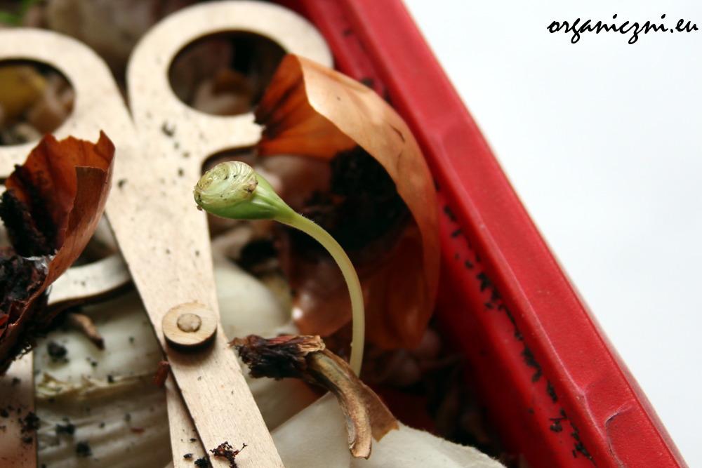 Porządki w kompostowniku: życie!