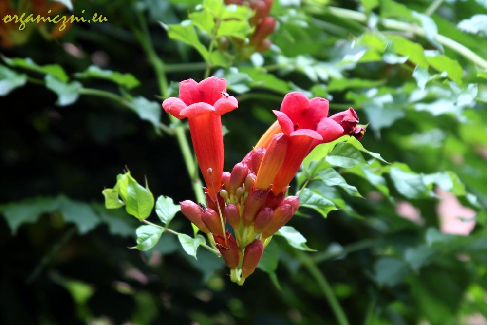 Lipiec to czas, kiedy w Ogrodzie kwitnie mnóstwo kwiatów