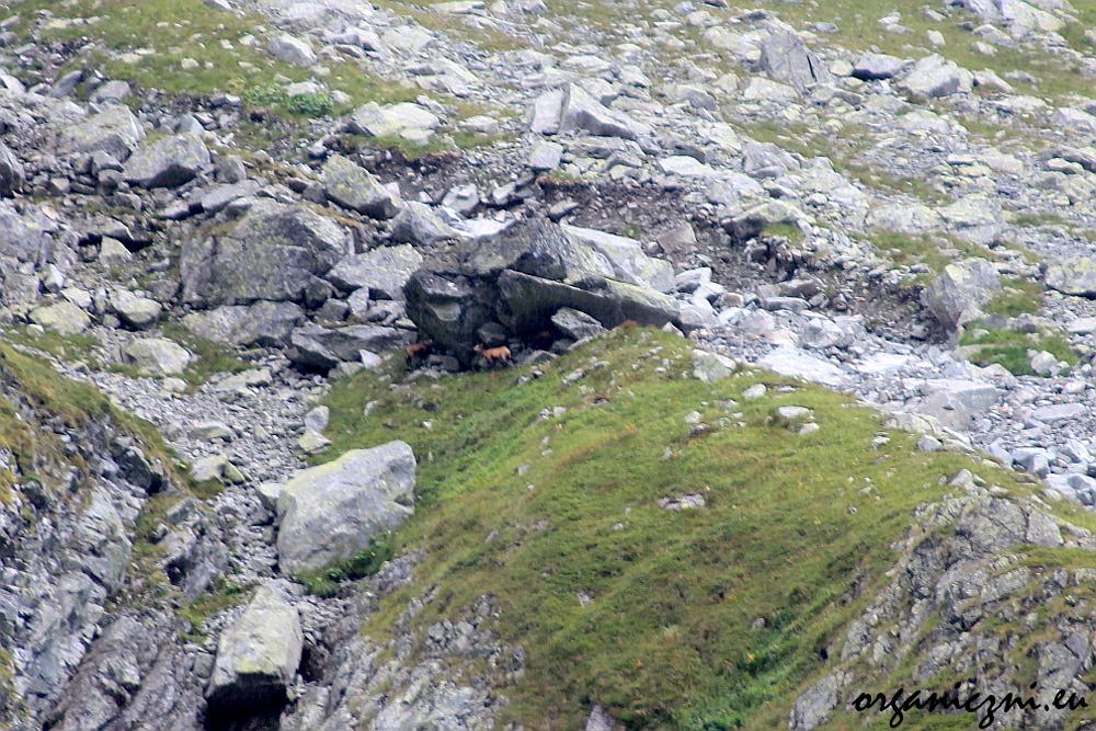 Kozice chroniące się przed deszczem (zdjęcie robione w ulewie, więc jakość bez szaleństw)