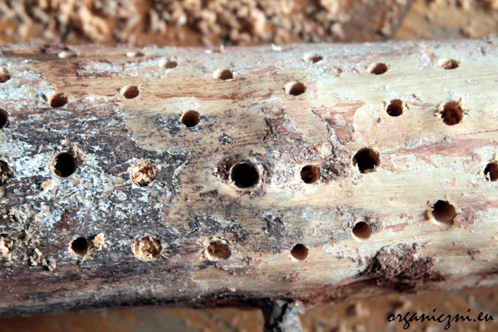 Jak zbudować hotel dla owadów? Można użyć kawałka drewna i wkrętarki