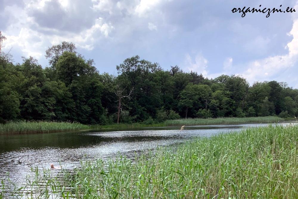 Jezioro Dziewicze pod Wrocławiem