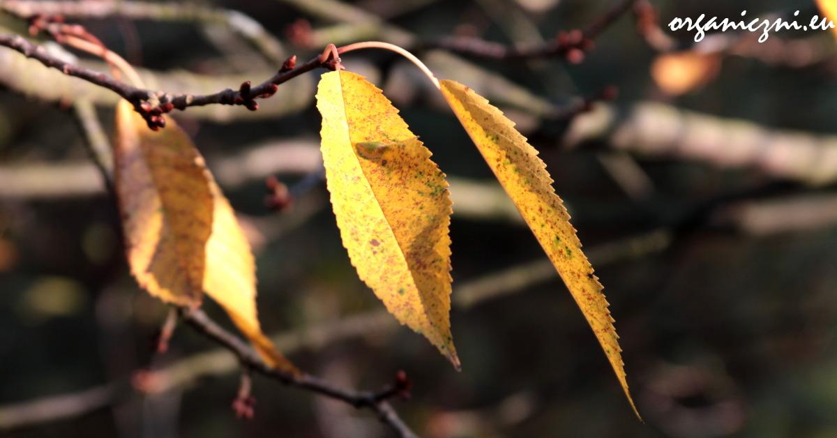 Zostaw liście dla jeża