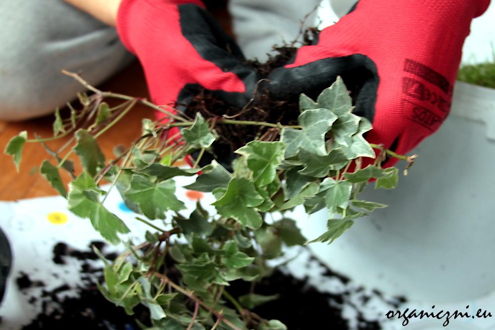 Jak zrobić las w słoiku?